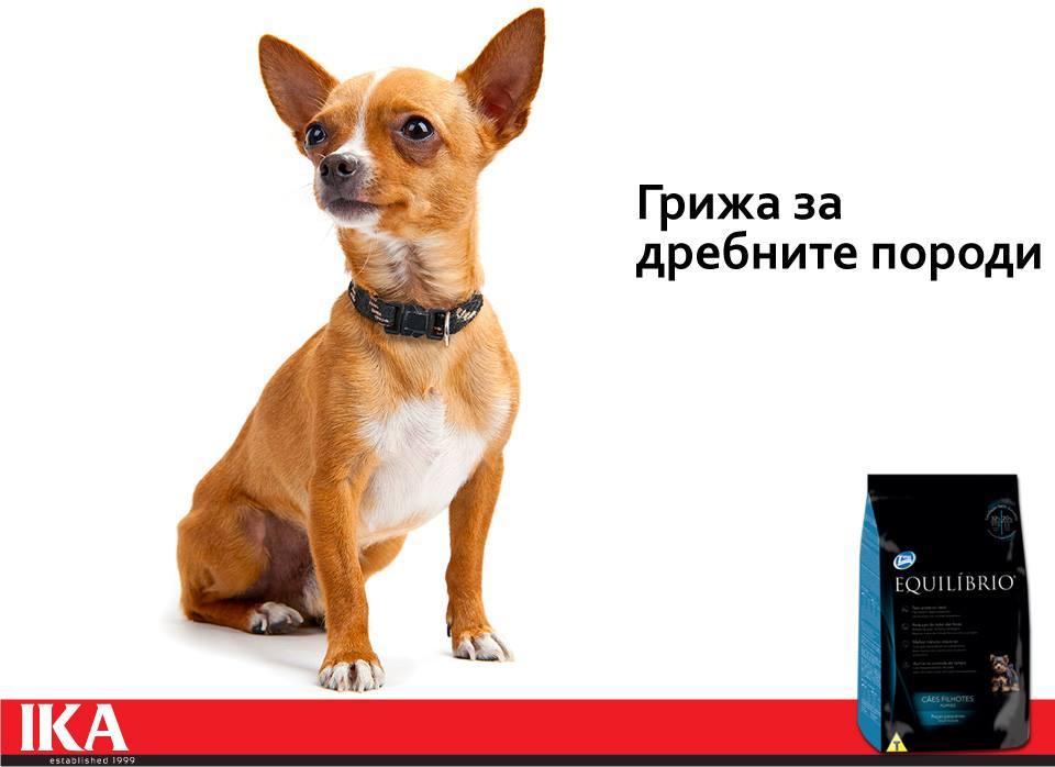 снимка дребни породи кучета
